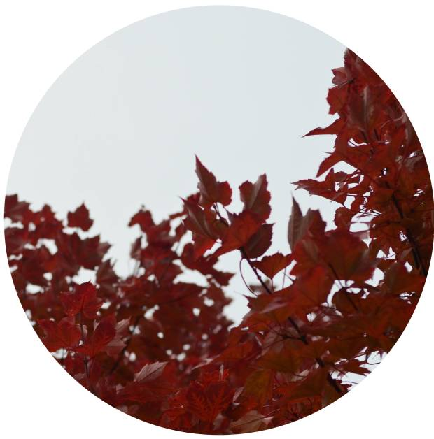 red circle leaves